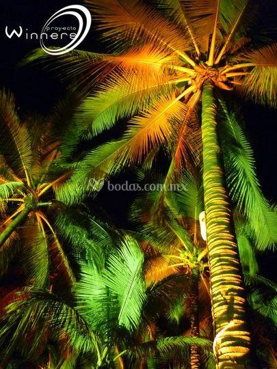 Proyecto winners for Iluminacion para palmeras