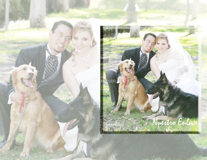 DVD boda amores perros