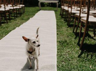 La boda de Natasha y Guillermo 2