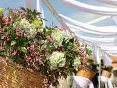 La boda de Andrea y Julio 6