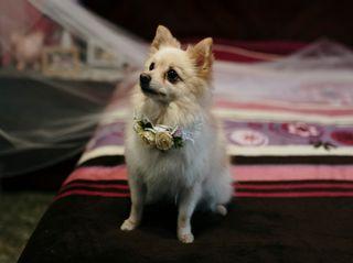 La boda de Treisy y Gilberto 2