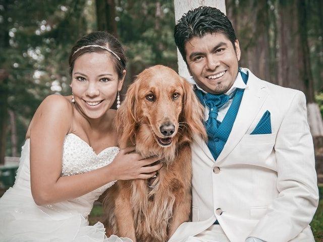 Protocolo para mascotas en la boda