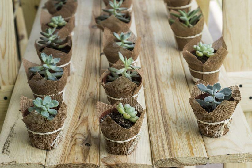 Suculentas en la decoraci n de tu boda for Decoracion con plantas suculentas