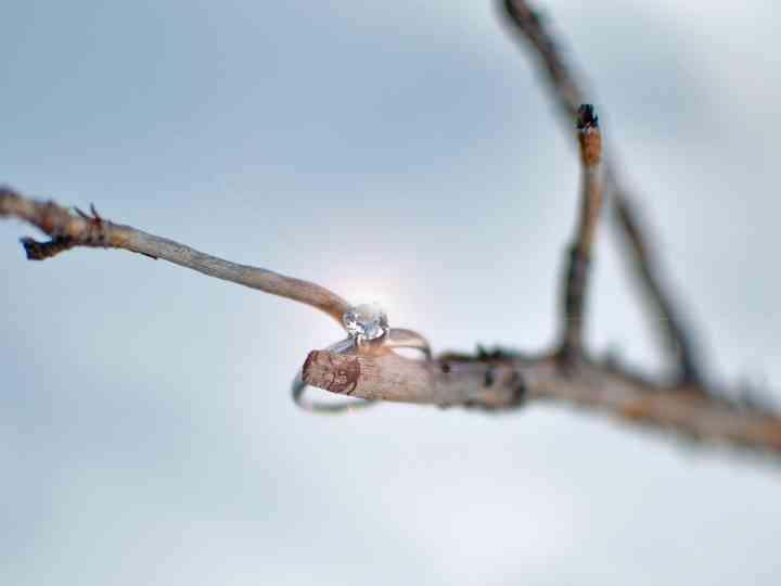 fotografía de anillo de compromiso sobre rama al aire libre