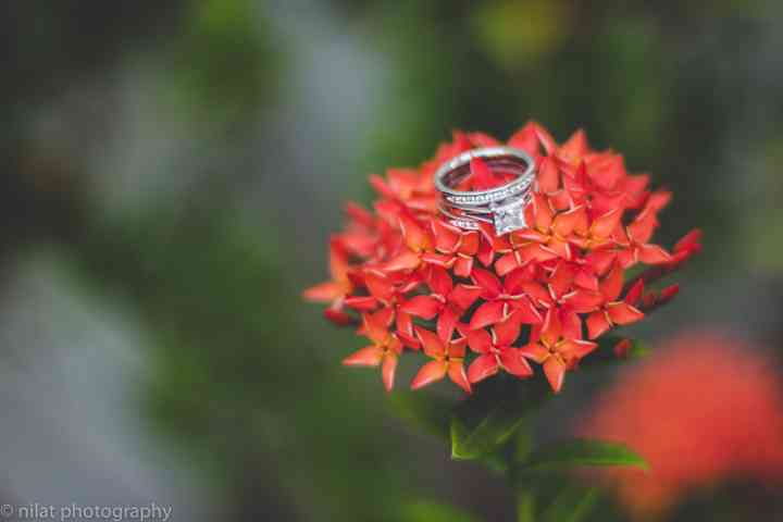 anillo de compromiso sobre flores rojas