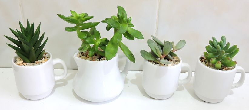 Vinde - Plantas y Artesanías