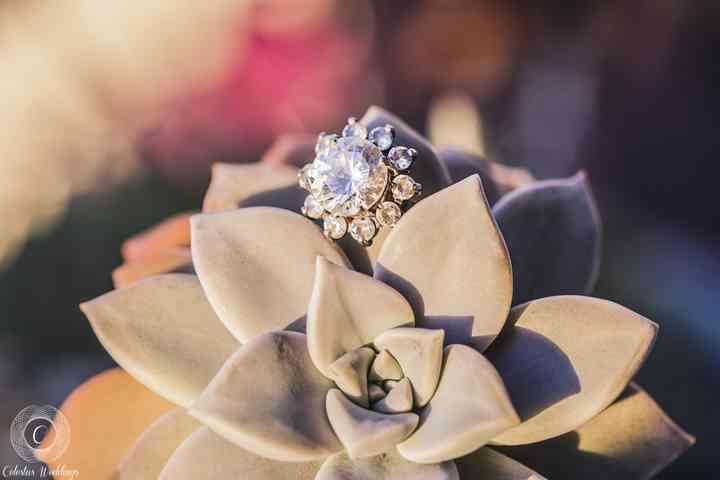 anillo de compromiso elegante sobre suculenta al aire libre