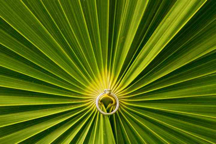 foto creativa de anillo de compromiso sobre palma