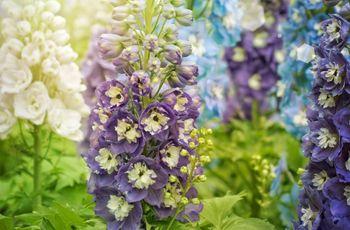 Flores para boda según la temporada: conoce sus secretos