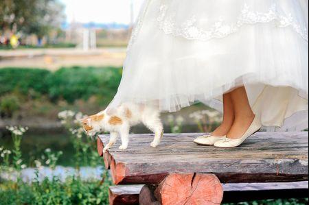 Zapatos sin tac�n para la novia