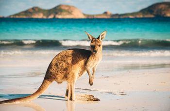 Luna de miel en Australia: una completa guía para dar el salto