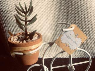 Vinde - Plantas y Artesanías 1