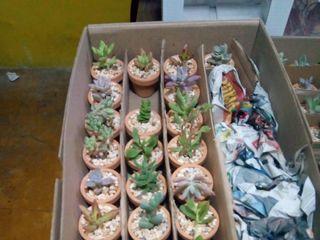 Vinde - Plantas y Artesanías 3
