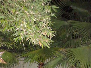 Jardín Bambú 1