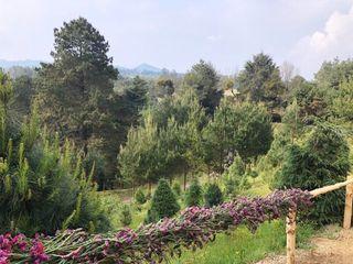 El Bosque del Ciclo Verde 1