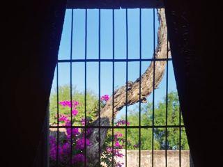 Hacienda Corcovada 4