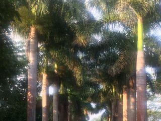 Hacienda San Pedro Ochil 1