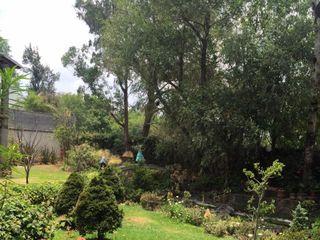 Jardín de Los Olivos 7