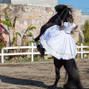 La boda de Czestochowa Del Moral Stevenel y Hacienda Real Puebla 27