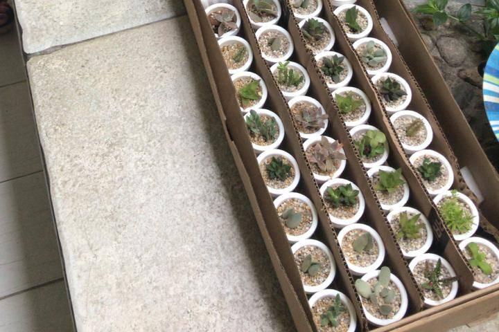 Vinde - Plantas y Artesanías 17