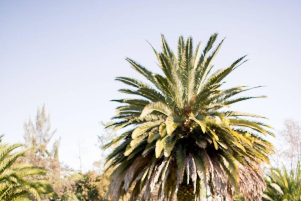 Rancho Nuevo La Virgen 11
