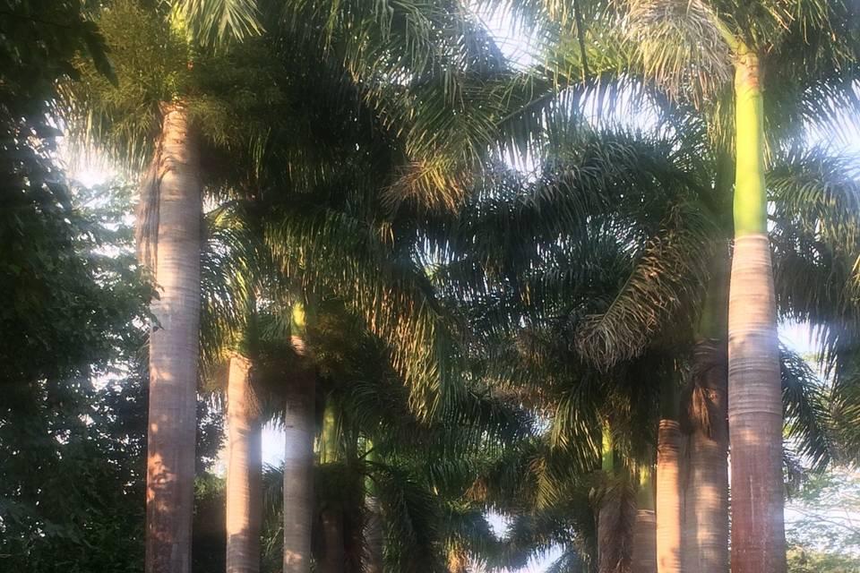 Hacienda San Pedro Ochil 3