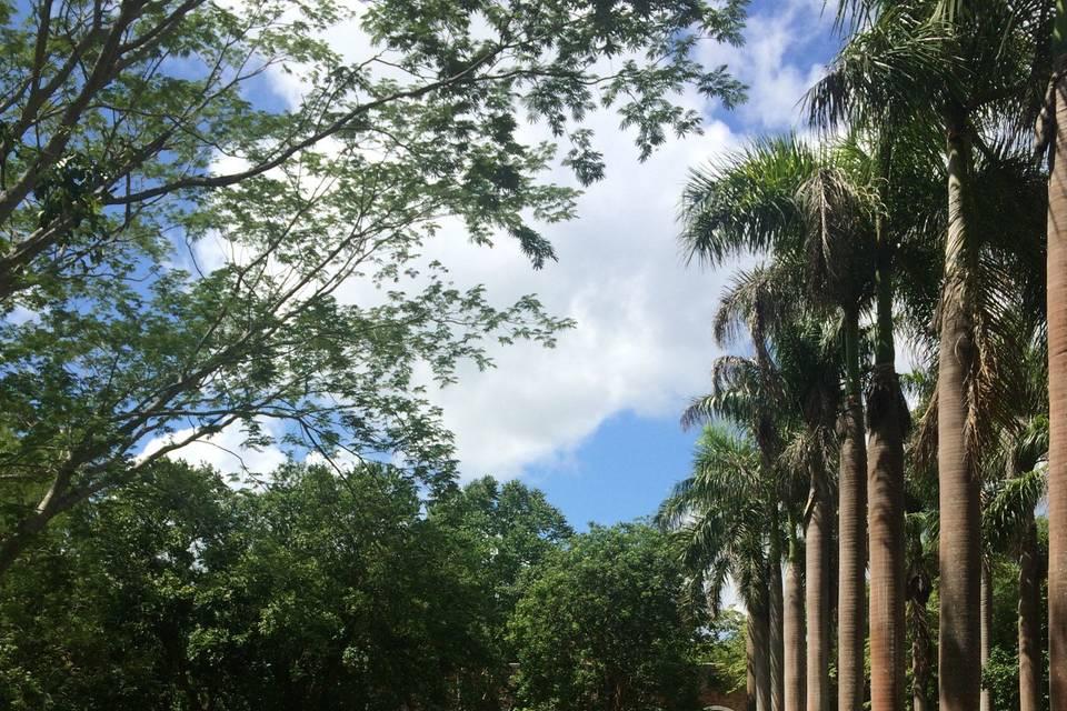 Hacienda San Pedro Ochil 5