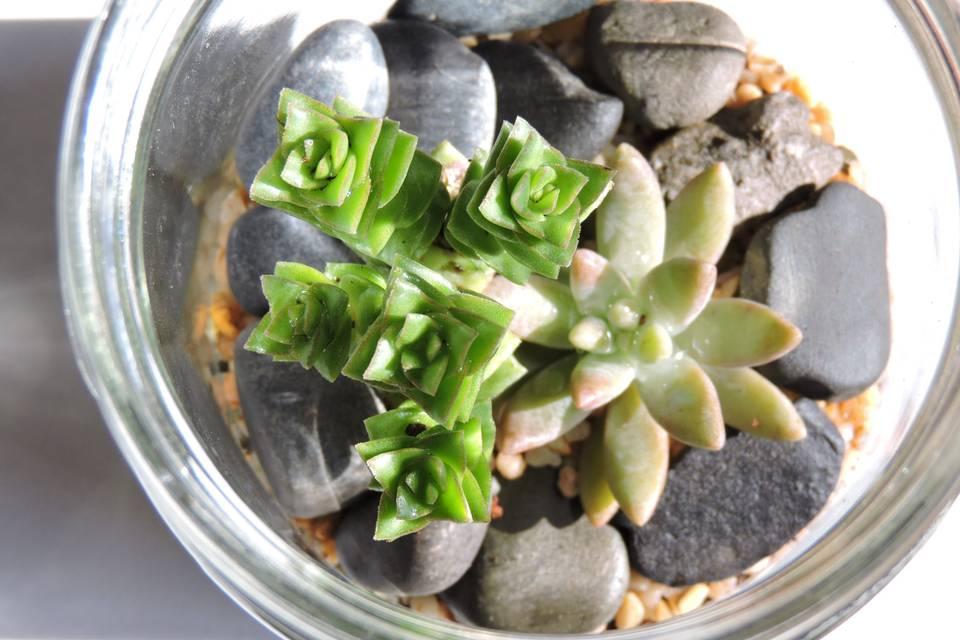 Vinde - Plantas y Artesanías 16
