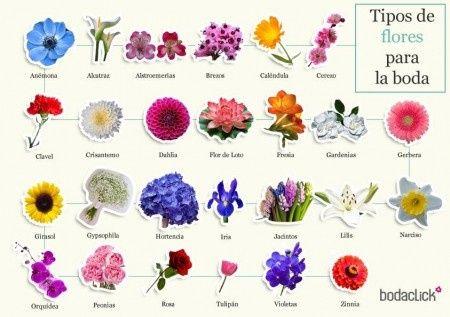 Tipos de flores para la boda foro organizar una boda - Todo tipo de plantas con sus nombres ...