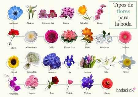 Tipos de flores para la boda
