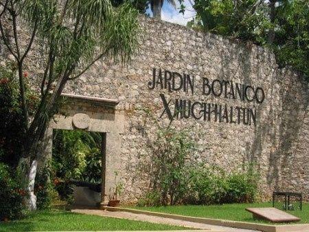 San francisco campeche ciudad patrimonio foro for Jardin botanico san felipe
