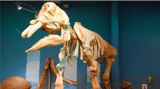 Luna de Miel en Chihuahua, recomendación de Museos 🦖 - 1