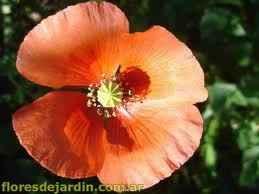 Significado de las flores que usamos o usaremos!! 1