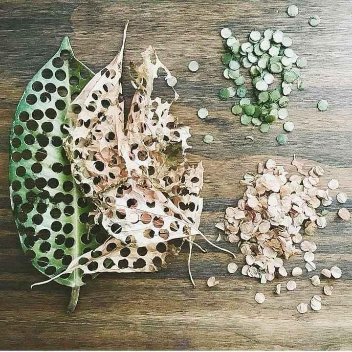 Confeti Biodegradable 🍂 - 1
