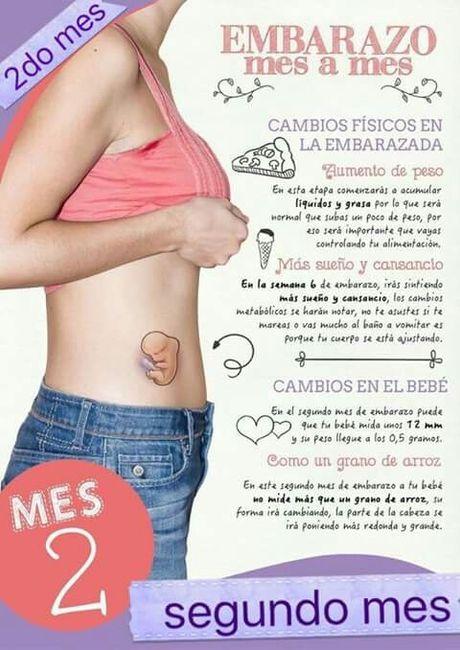 Etapas y desarrollo del embarazo foro futuras mam s - Primer mes de embarazo sintomas ...