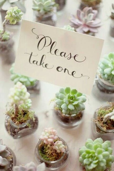 Suculentas y cactus para recuerdos de boda - 1