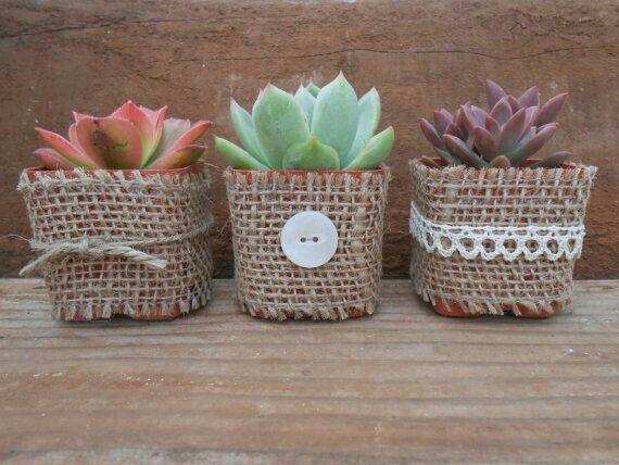 Suculentas y cactus para recuerdos de boda - 3
