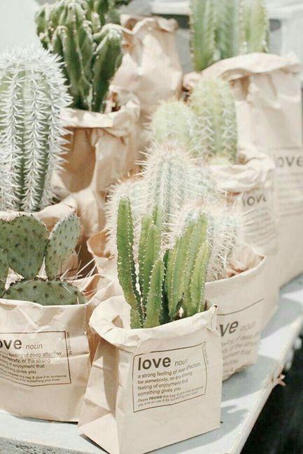 Suculentas y cactus para recuerdos de boda - 5
