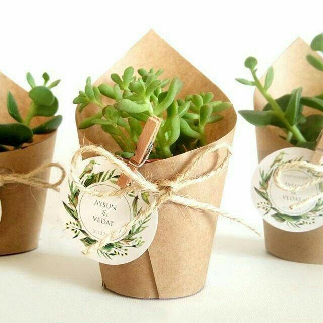 Suculentas y cactus para recuerdos de boda - 6