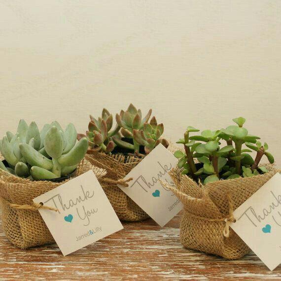 Suculentas y cactus para recuerdos de boda - 7