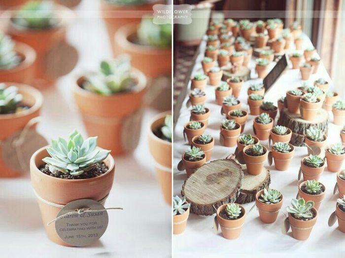 Suculentas y cactus para recuerdos de boda - 10