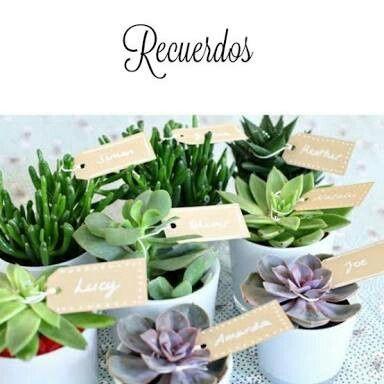 Que les parecen las plantas de recuerdo foro manualidades para bodas - Plantas pequenas para regalar boda ...