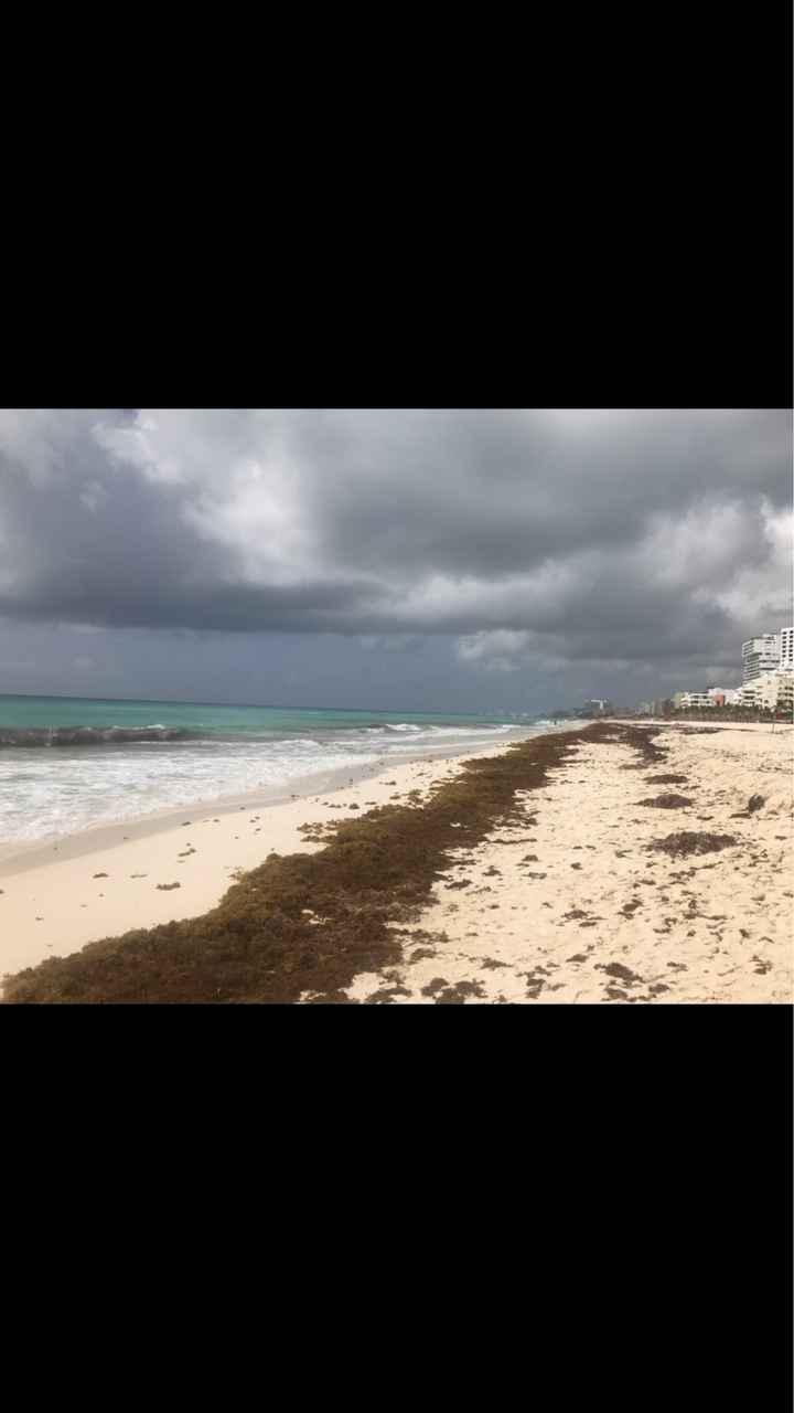 Alerta de Sargazo en rivera maya :( - 1