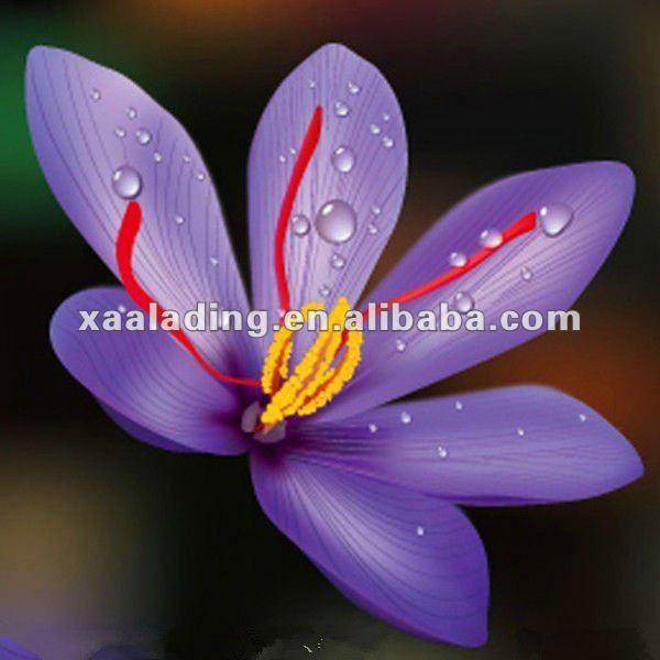 Las Flores Mas Caras Del Mundo Las Quieres Para Tu Ramo Foro