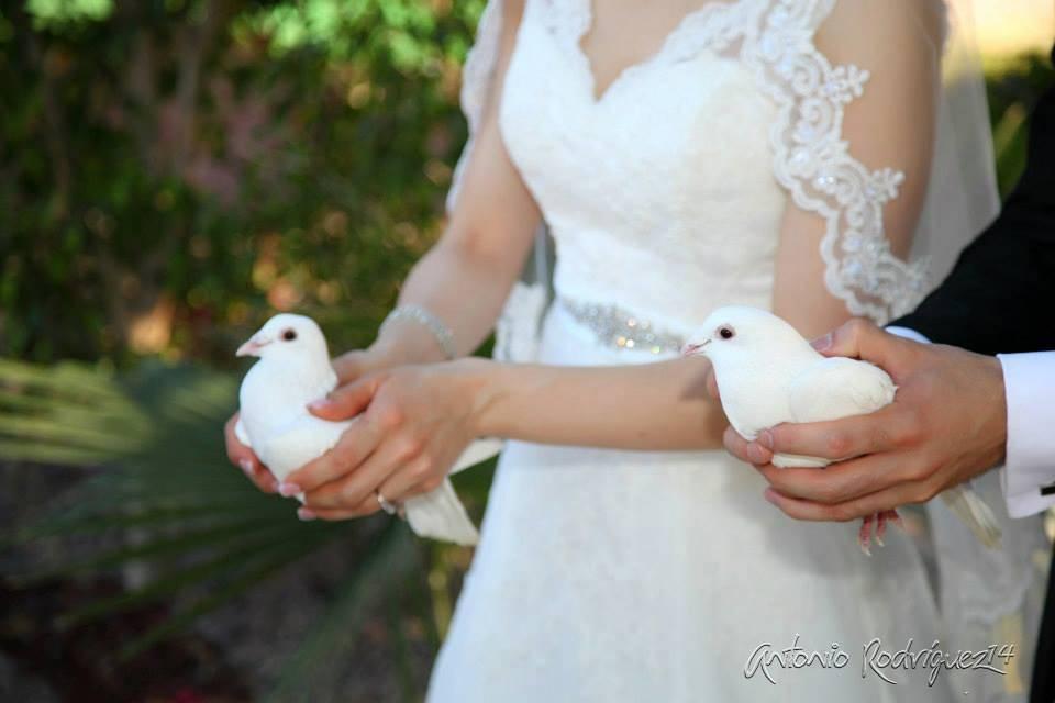 Weddings Doves Hermosillo