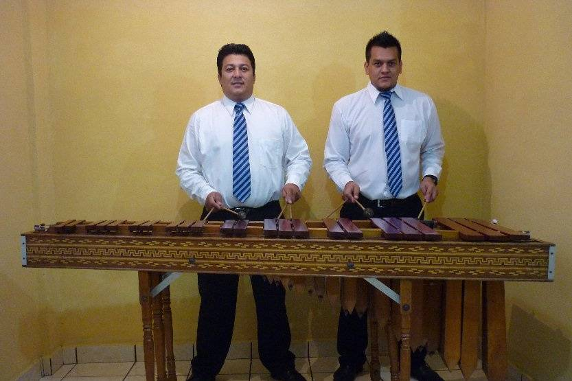 Marimba Premier