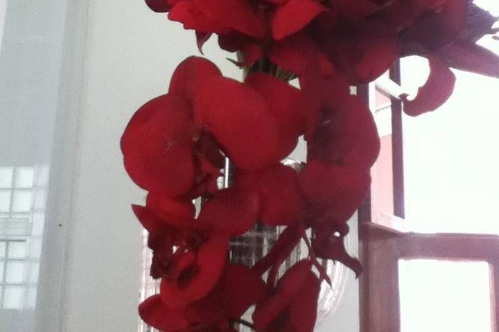 Florería Orquídea