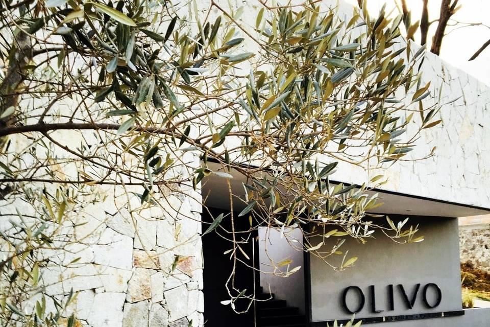 Olivo Jardín + Eventos