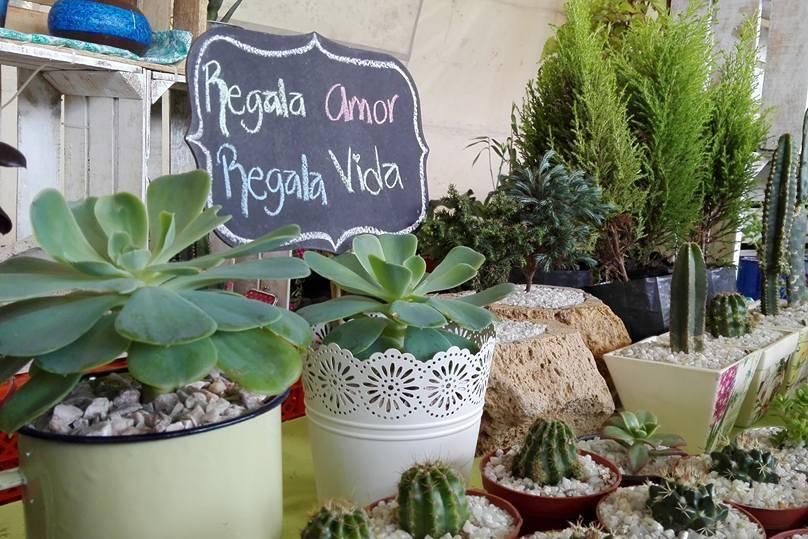 Plantita Coqueta